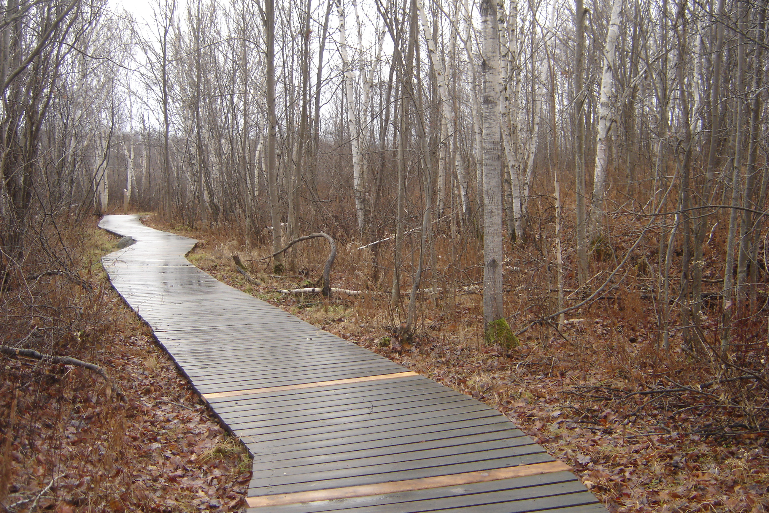 Laurier woods trail with boardwalk 2