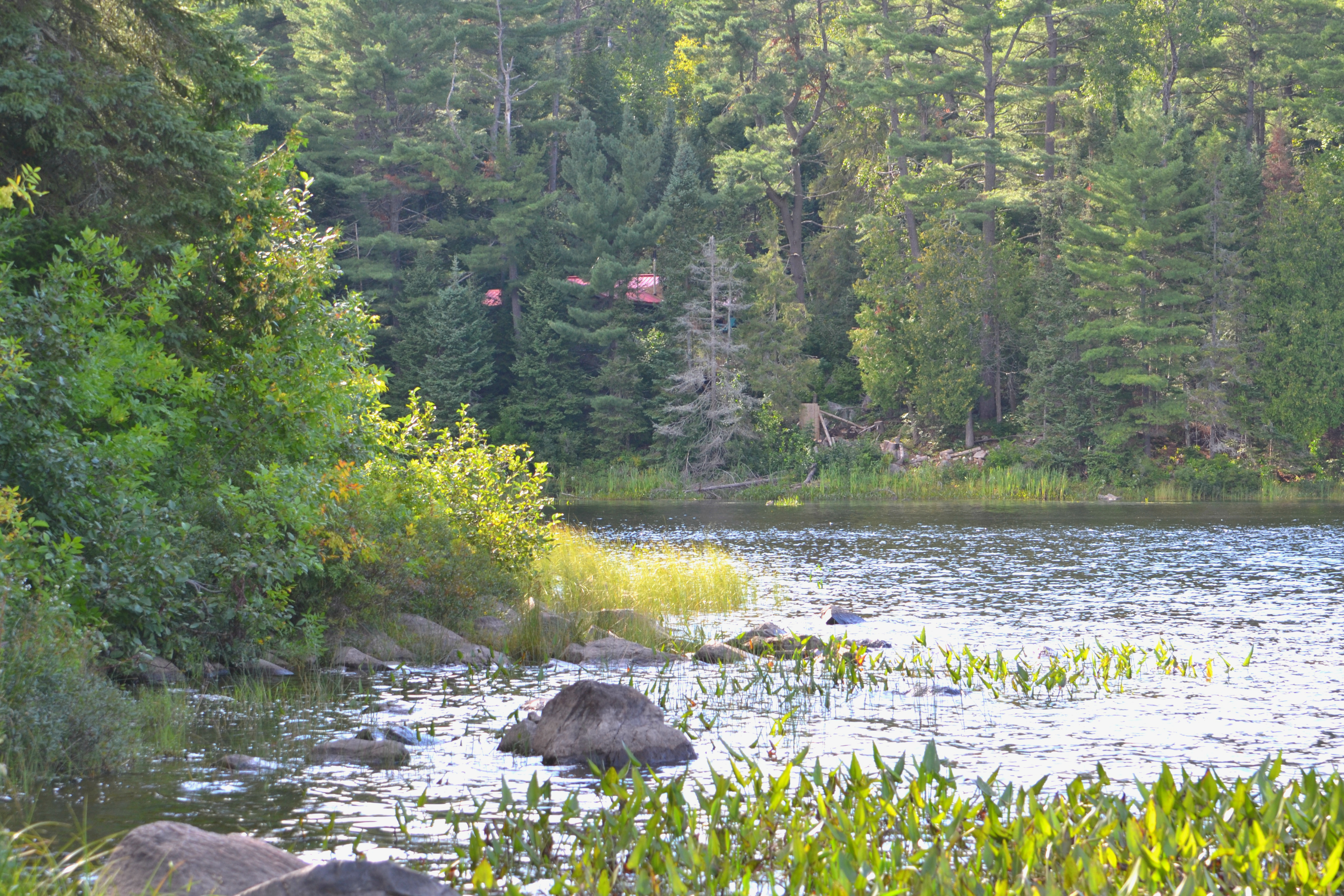 The roof of Louise's cabin is still visible through the woods on the shore of Lake Pimisi