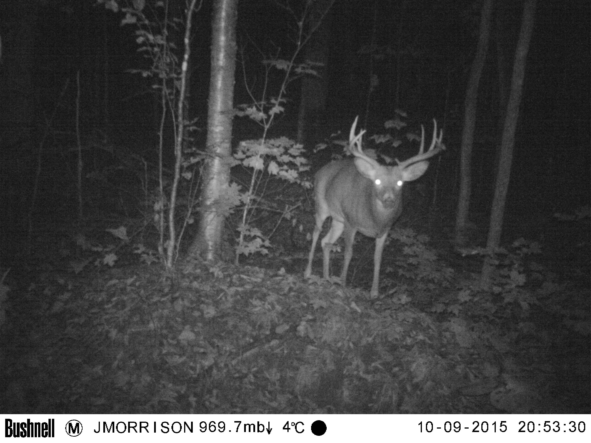 Trail Camera Shot Jeff Morrison