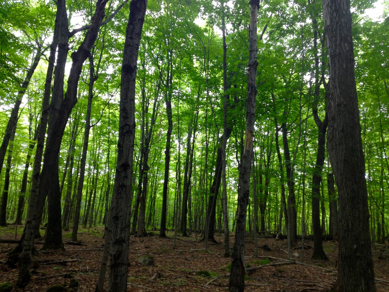 lesser known manitoulin hikes
