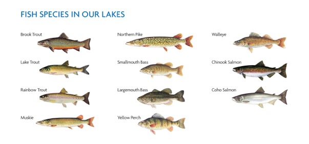 Lures that hunt for centre northeastern ontario canada for Ontario fishing license