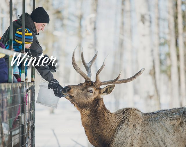Winter-Banner_Template 640x507