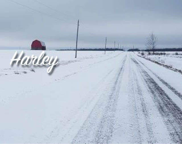 Harley-Banner_Template 640x507