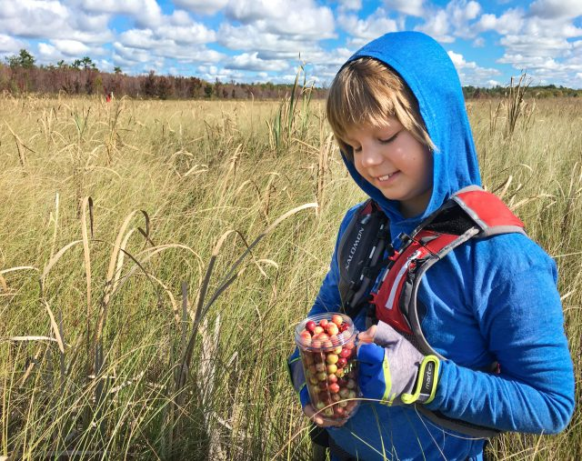 Boy with Cranberries on Cranberry Trail, Callander, Ontario